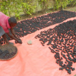 Ugandan entrepreneur uses briquettes to address gender and development issues